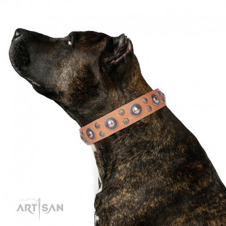 """Tan Leather Dog Collar with Chrome Plated Decor - Floral Fashion Handcrafted by Artisan"""""""""""