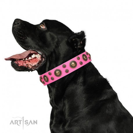 """Pink Leather Dog Collar with Brass Decor - Shiny Beauty Handcrafted by Artisan"""""""""""