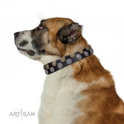 Black Leather Dog Collar with Brass and Chrome-plated Decor - Fabulous Circles Handcrafted by Artisan""""