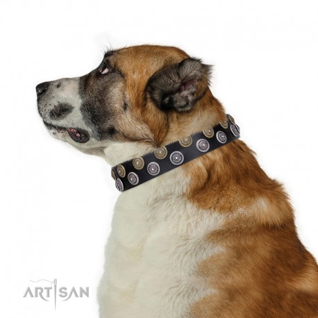 """Black Leather Dog Collar with Brass and Chrome-plated Decor - Fabulous Circles Handcrafted by Artisan"""""""""""