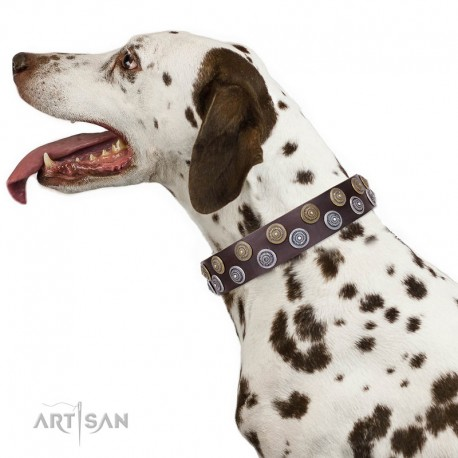 Brown Leather Dog Collar with Brass and Chrome-plated Decor - Exquisite Circles Handcrafted by Artisan""""