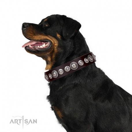 """Brown Leather Dog Collar with Chrome-plated Decor - Magnificent Shields Handcrafted by Artisan"""""""