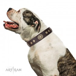 "Studded Brown Leather Dog Collar with Brass Plated Decor - Studded Beauty"" Handcrafted by Artisan"""