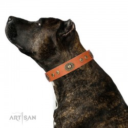 "Decorated Tan Leather Dog Collar - Studded Finesse"" Brass Decor Handcrafted by Artisan"""