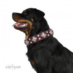 """Brown Leather Dog Collar with Chrome-plated Decor - Unconventional Allure"""" Handcrafted by Artisan"""""""