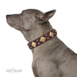 "Brown Leather Dog Collar with Brass Decor - Goldish Fineness"" Handcrafted by Artisan"""