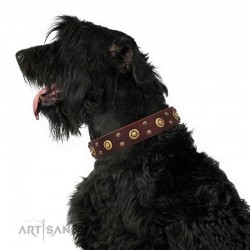 "Brown Leather Dog Collar with Brass Decor - Golden Gift"" Handcrafted by Artisan"""