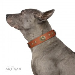 "Elegant Tan Leather Dog Collar with Brass Decor - Vintage Chic"" Handcrafted by Artisan"""