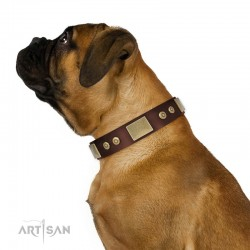 "Brown Leather Dog Collar with Plates - Strict & Confident"" Handcrafted by Artisan"""