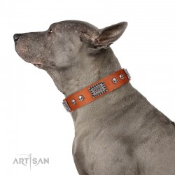 "Tan Leather Dog Collar with Chrome Plated Skulls & Plates - Audacious and Edgy"" Decor by Artisan"""