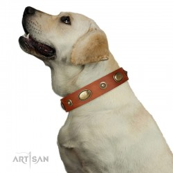 "Tan Leather Dog Collar with Brass Plated Decor - ""Retro Temptation"" Handcrafted by Artisan"