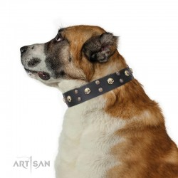 "Studded  Leather Dog Collar - ""Face the Skull"" Brass Decor by Artisan"