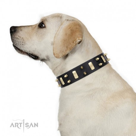 "Spiked Leather Dog Collar with Brass Plated Decor - Hip & Edgy"" Handcrafted by Artisan"""
