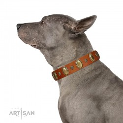 """Total Grace"" FDT Artisan Tan Leather Dog Collar with Eye-catchy Ovals and Small Studs"