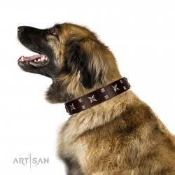 """""""Bigwig Woof"""" FDT Artisan Brown Leather Dog Collar with Chrome Plated Stars and Square Studs"""