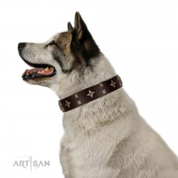 """Trendy Candy"" FDT Artisan Brown Leather Dog Collar Adorned with Stars and Tiny Squares"