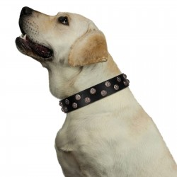 """Power-Flower"" FDT Artisan Black Leather Dog Collar with Two Rows of Silver-like Studs with Engraved Flowers"