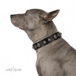 """""""Tricky Ricky"""" FDT Artisan Black Leather Dog Collar Adorned with Silver-Like Conchos"""
