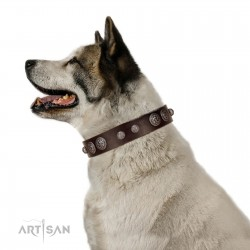 """""""Choco Brownie"""" FDT Artisan Brown Leather Dog Collar Adorned with Silver-Like Conchos"""