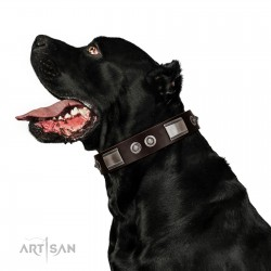 """""""Baller Status"""" FDT Artisan Brown Dog Collar Adorned with a Set of Chrome Plated Stars and Plates"""